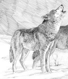 wolves by MC-kenzie