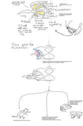 Idea for some of verpedi's descendants