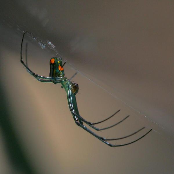 It's a Spider by craftworker