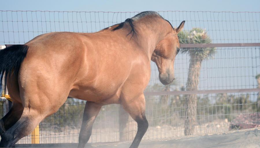 Be a Stallion I by Anidi