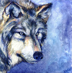 Wolf for Jamie by thegryph