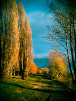 Surreal Rhine III by unityofmulti