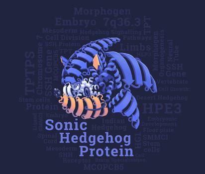 Sonic Hedgehog Protein