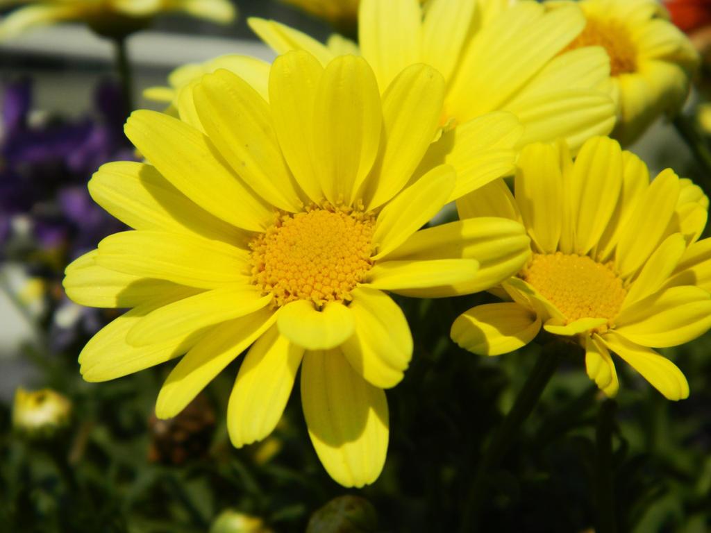 And it was all yellow by o0oO-araceli-Oo0o