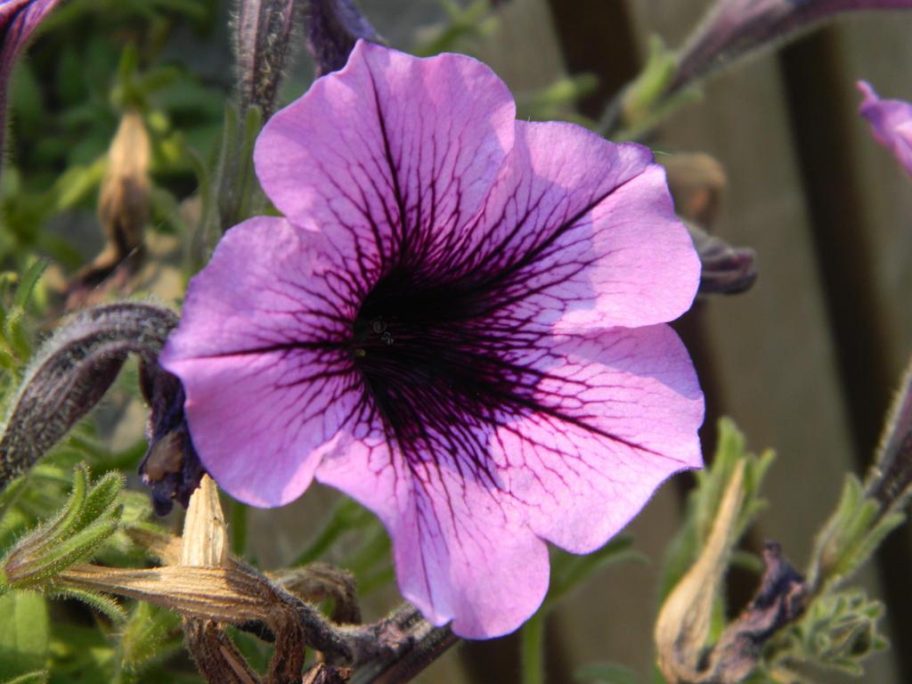 Purple purple by o0oO-araceli-Oo0o