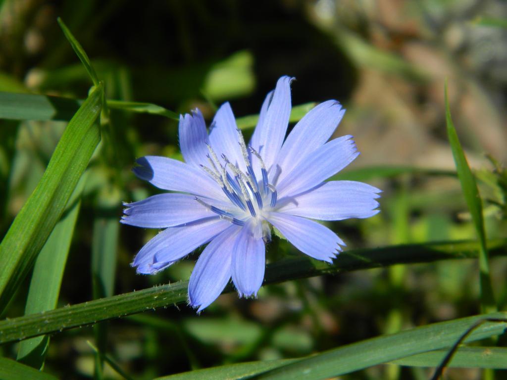 The flower of a light blue by o0oO-araceli-Oo0o
