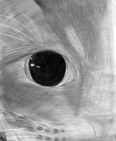 KittykinsMcFlufferBottoms 1 by Shalinar
