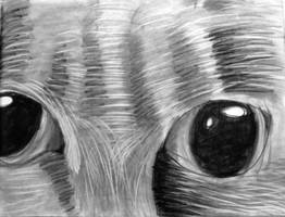 KittykinsMcFlufferBottoms 2 by Shalinar