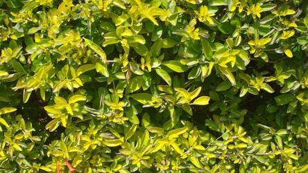 Leaves texture 1