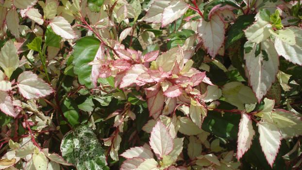 Leaves texture 5
