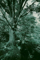 Tree of Life - mono