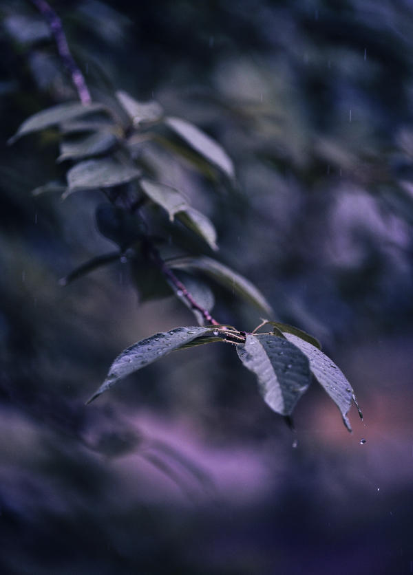 Purple rain? by ebbixx