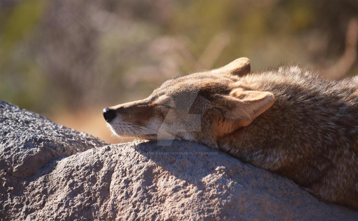 Sleepyhead by TashinaSamantha