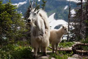 mountain goats 1 by thedirtyknapkin
