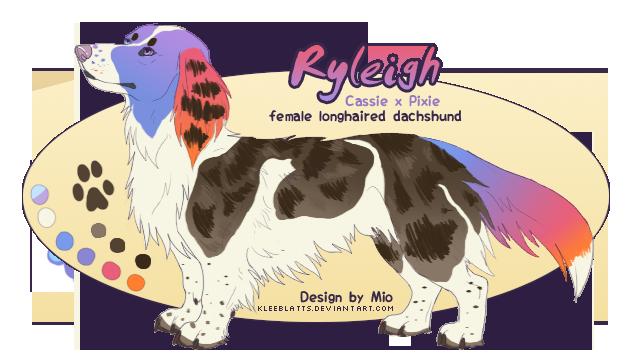 Ryleigh - dachshund litter pup by dachsi
