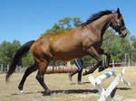 Horse Stock 41
