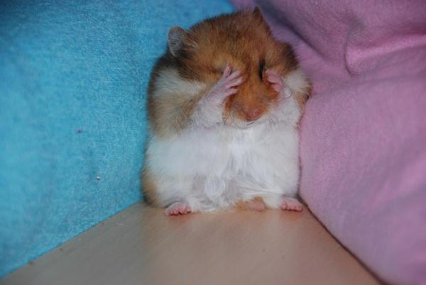 hamster by moloko-yeah