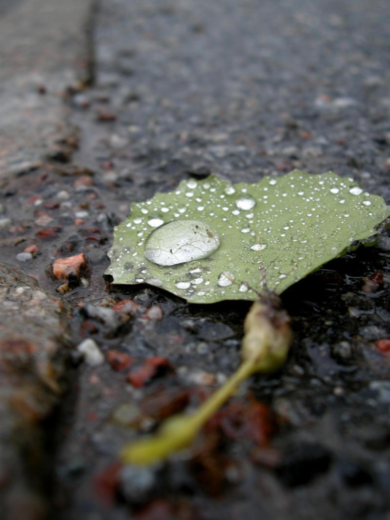 leaf  by Carmen San
