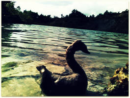 Unreal Swan In The Lake I by mary11dc