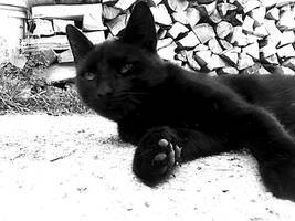 Black Cat by mary11dc