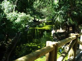 Retiro park XVII