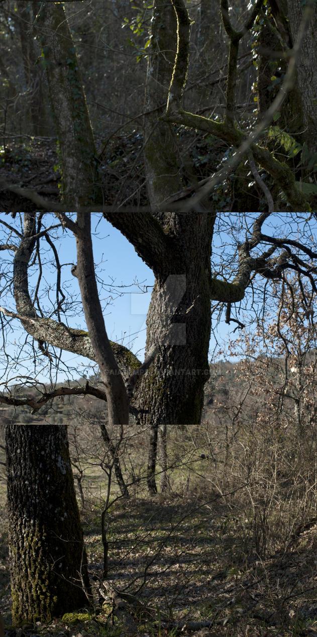 my woods by GaiaTempe
