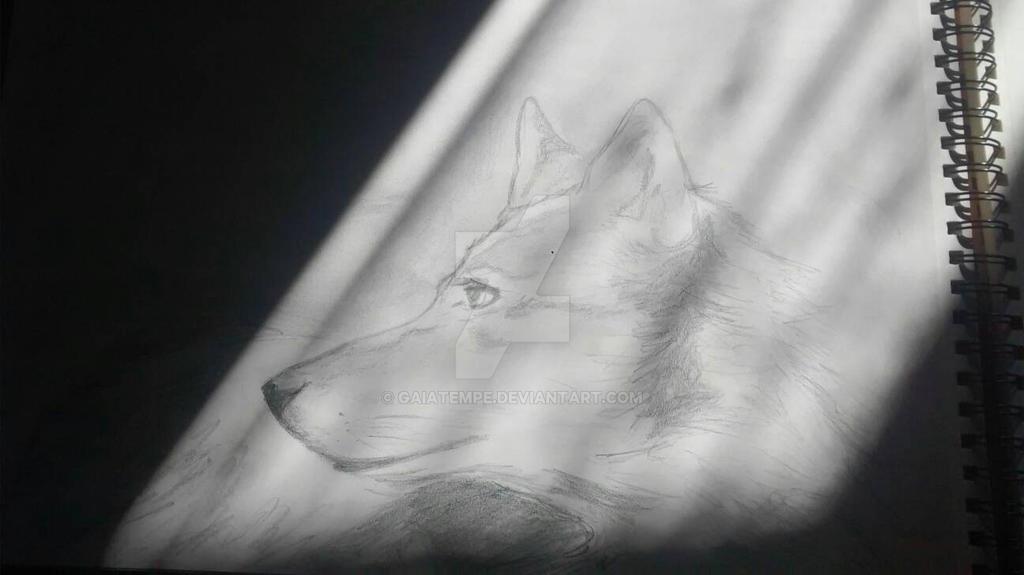 wolf - sketch by GaiaTempe