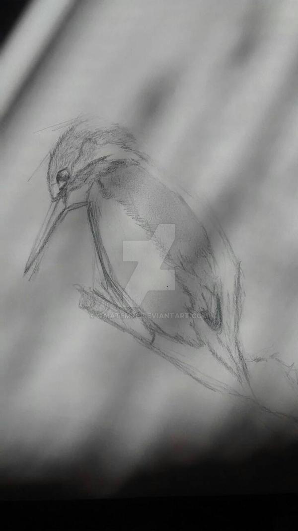 martin pescatore sketch by GaiaTempe