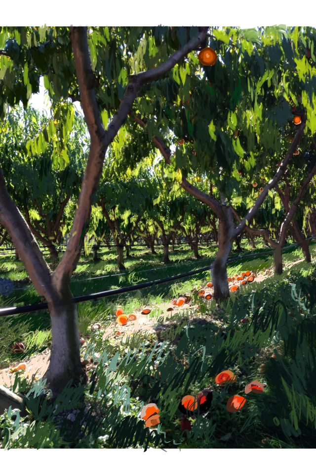 Apricot Orchard by Utaleasha