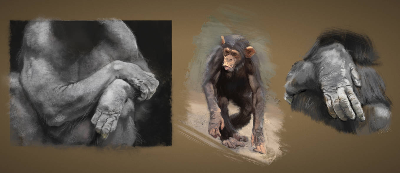 Study: Chimpanzees by M0nkeyBread