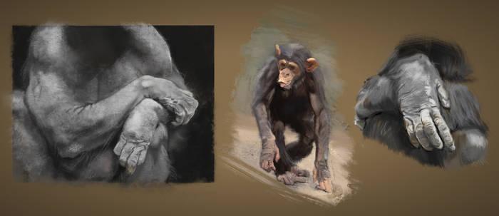 Study: Chimpanzees