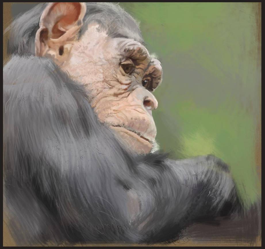 Study: Chimpanzee 02 by M0nkeyBread