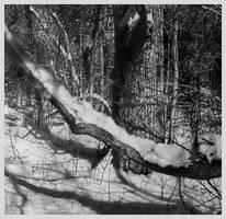 Winter Skins II by arminmersmann