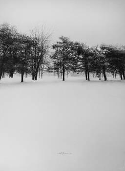 Winter Lines