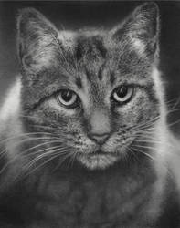 Suders Cat