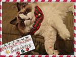 Merry Xmas from Jezzy