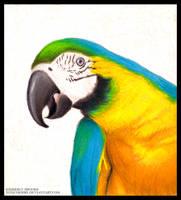 Parrot Color Portrait by toxicdesire