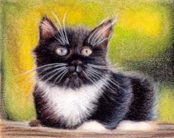 Tuxedo Kitten by toxicdesire