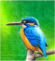 Kingfisher Colorpencil by toxicdesire