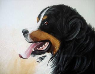 Bernese Mountain Dog by toxicdesire