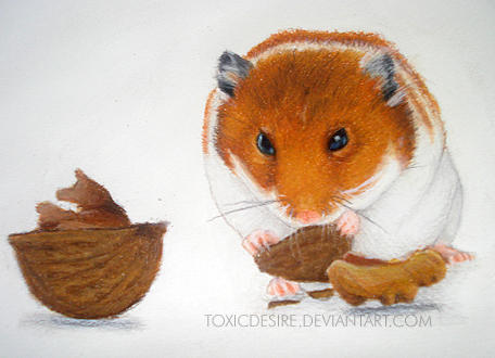 Hamster color pencil