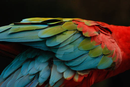 Feather Fade