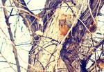 Animal's Eyes by solefield