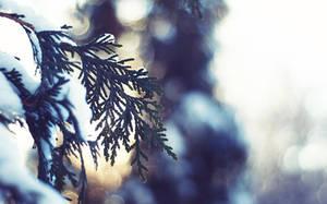 Winter Light - Wallpaper by solefield