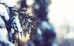 Winter Light - Wallpaper