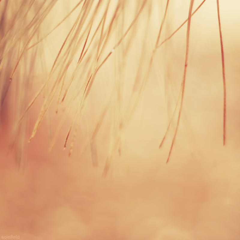 Value by solefield