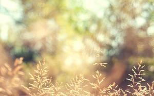 Autumn Wallpaper by solefield