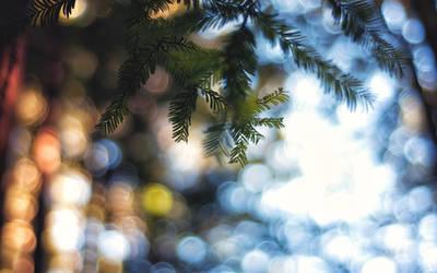 Forest Glow by solefield