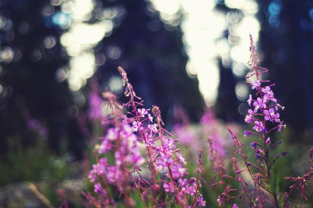 Peaceful Joy by solefield