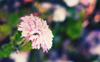 Bliss by solefield